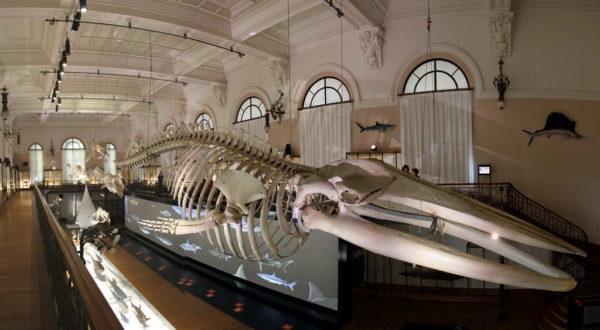 Monaco, Oceanographic Museum