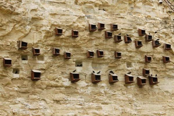 Urfa_Birecik_Thermit Ibis Nests