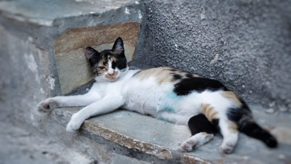 Lesvos_Cats